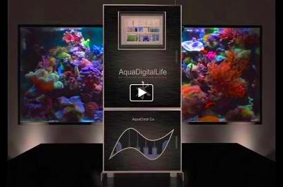 эксклюзивный аквариум в интерьере